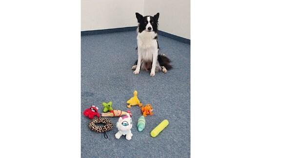 Abbildung einer Buchseite mit Illustrationen zum Thema Hundespielzeug. Der Hund hat neun Spielzeuge vor sich liegen und sucht eines aus.