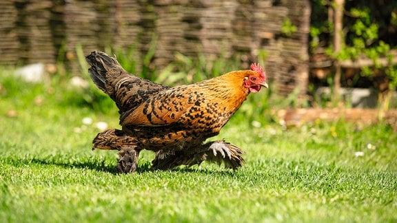 S. 120 aus 'Warum Hühner scharren'