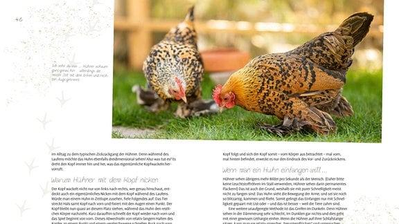 S.46 und 47 aus 'Warum Hühner scharren'
