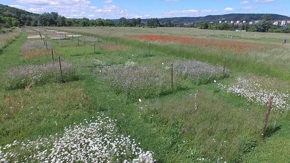 Ein Wiese mit vielen blühenden Plflanzen