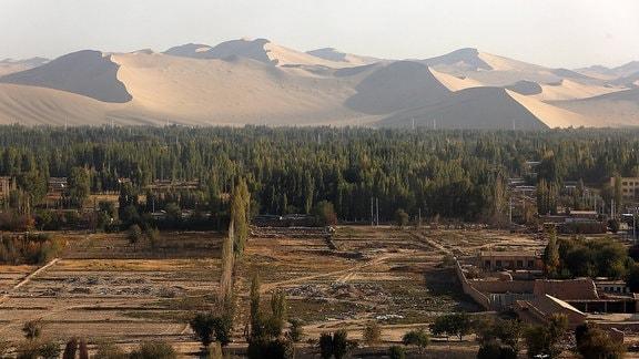 Im Hintergrund Wüste, im Vordergrund ein paar Bäume auf trockenem Boden.