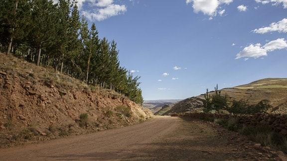 Bäume an einer Straße in den Anden von Bolivien