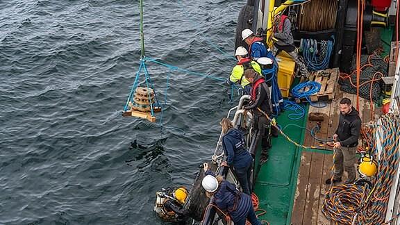 Austern aussetzen in der Nordsee