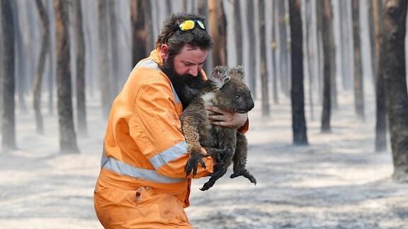Mann in leuchtend-organgefarbener Arbeitskleidung rettet Koala mit angebranntem Fell in einem durch Waldbrand geschädigtem Waldgebiet. Hält das Tier in den Armen, blickt angestrengt nach unten.