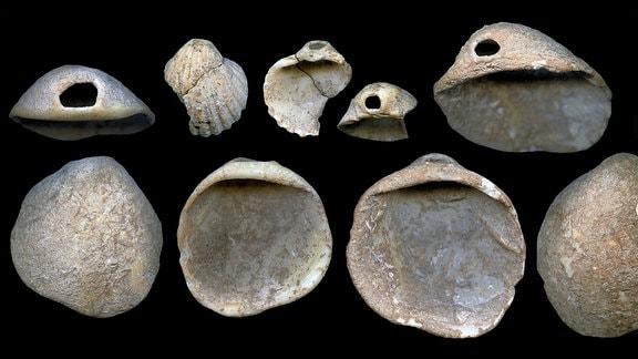 in der Höhle gefundene durchborte Muscheln, zwischen 115.000 und 120.000 Jahre alt
