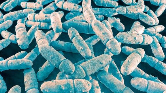 Illustration von Klebsiella pneumoniae Bakterien.