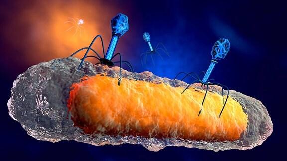 Bakteriophagen attakieren eine Bakterie