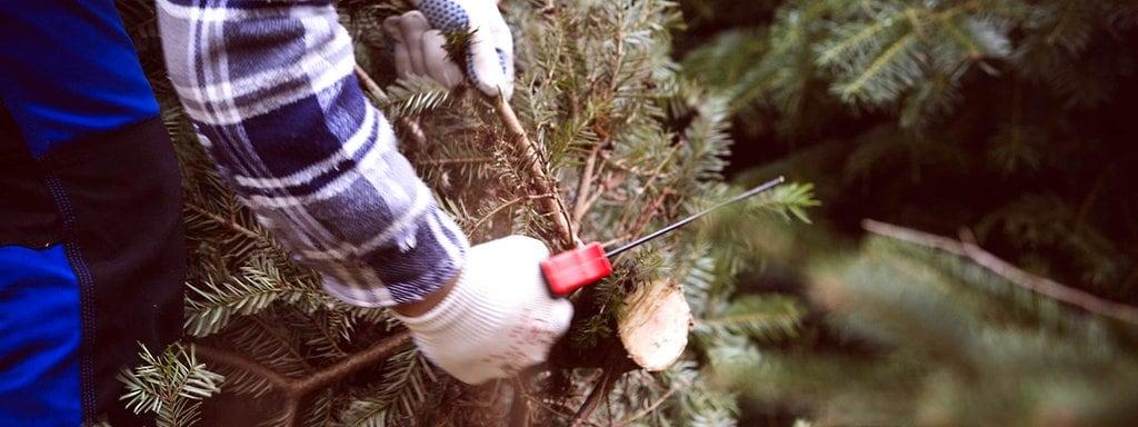 Bio weihnachtsbaum aachen