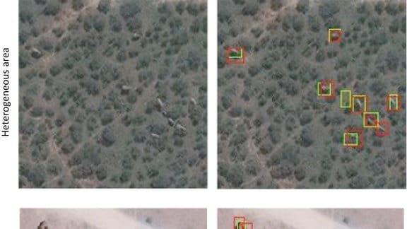 Beispiele für CNN-Erkennungen in Maasai Mara vom Geoeye-1-Satelliten