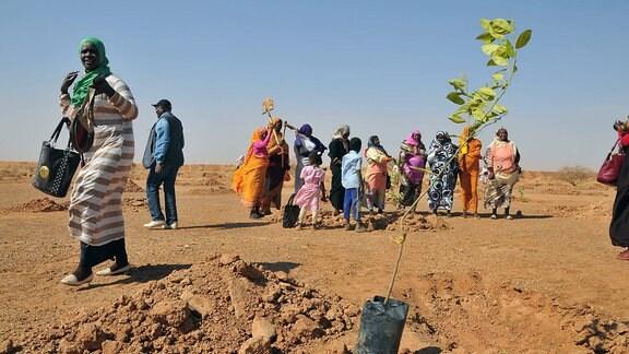 Menschen in einer Wüste pflanzen Bäume