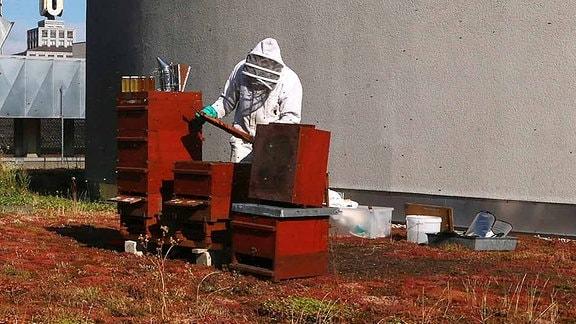 Imker mit seinen Bienenstöcken auf einem Dach.