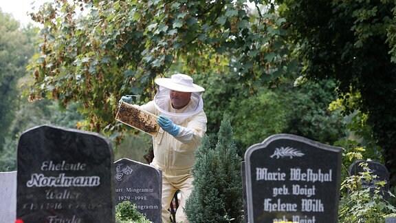 Hobby Imker Franz Beyer ( Steinmetzbetrieb Aschersleben ) hat auf dem Friedhof Aschersleben drei Bienensztöcke und produziert Honig Sachsen Anhalt