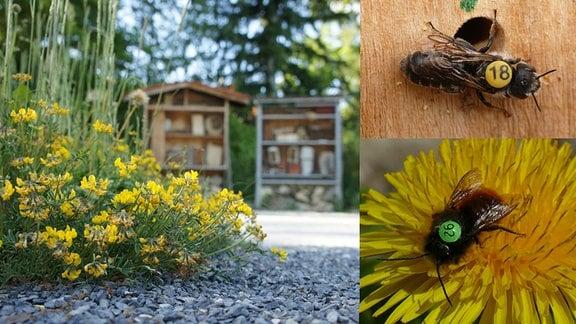 Pflanzen und nummerierte Insekten
