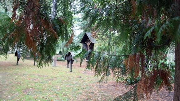 Lebensbaum vor Grabmalen.