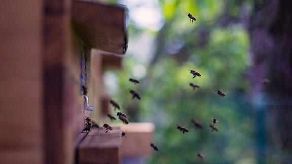 Imker bei der Arbeit: Wie aus der Honig aus dem Bienenstock in Honiggläser gelangt.