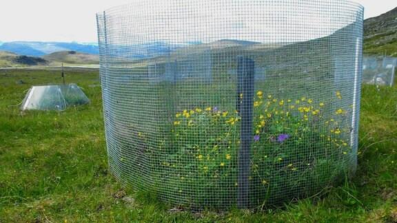 Auf einer Wiese steht ein runder Zaun, in dem Pflanzen höher wachsen als außerhalb des eingezäunten Bereichs. Im Hintergrund sieht man bodennahe, mit transparenter Folie abgesteckte Bereiche.