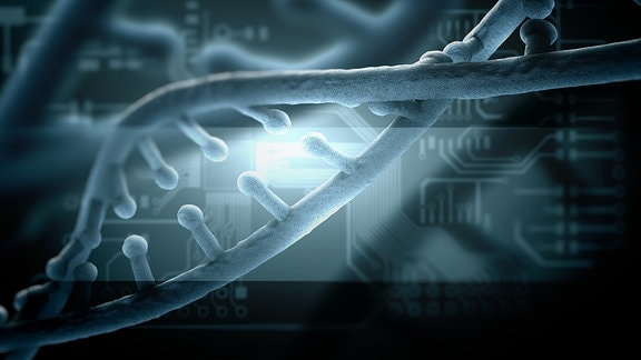 DNA-Moleküle, die sich teilt