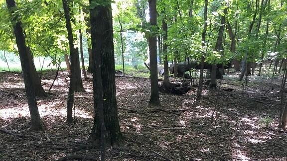 Ein Wald mit Regenwürmern - die Bodenvegetation ist verschwunden