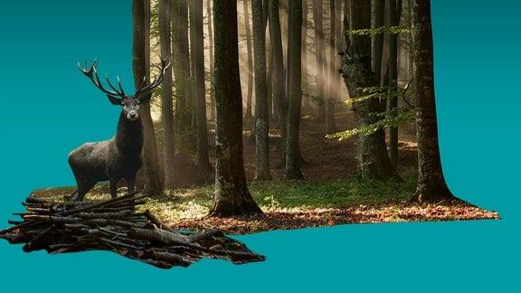 Holz, Hirsch, Wald auf blauer Fläche