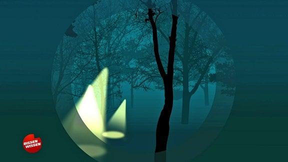 Grafik: Lampenschein in dunklem Wald