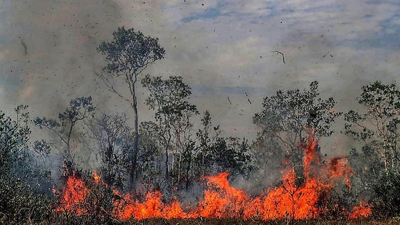 Brennender Amazonas