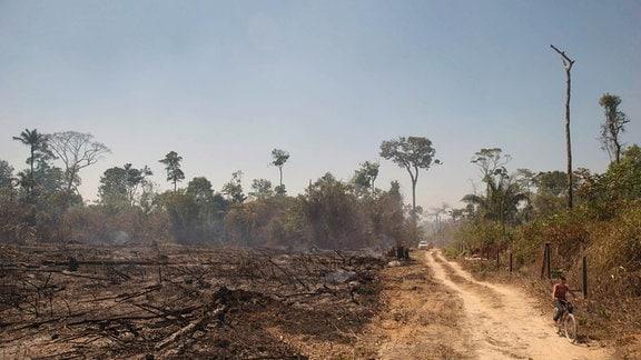 Brandrodung Amazonas Regenwald