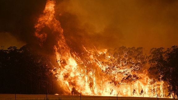 Unfassbar brennender Eukalyptus-Wald.