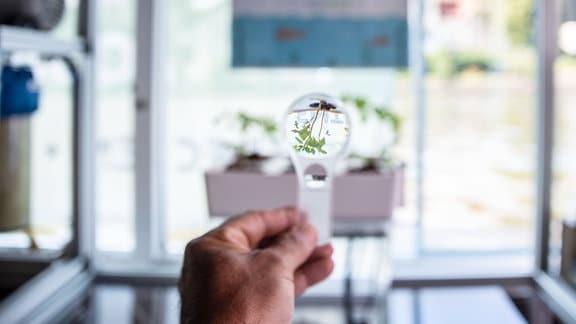 Wasserpflanze betrachtet durch eine Lupe