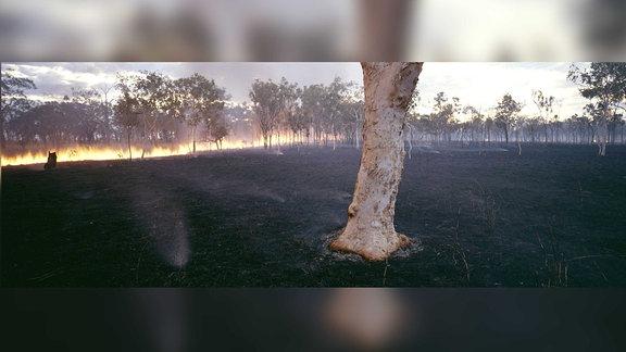 Ein Buschfeuer im Hintergrund. Ein abgebranntes Feld davor, auf dem nur noch ein einzelner Baum steht.