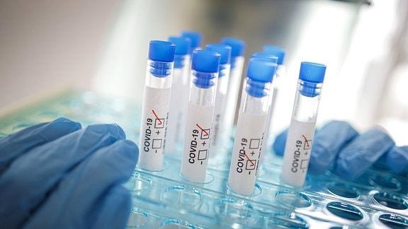 Reagenzgläser mit der Beschriftung COVID-19