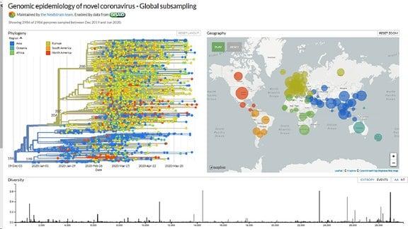 Eine Grafik zeigt in vielen Farben die Mutationen des Coronavirus weltweit
