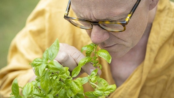 Mann riecht an einem Topf mit Basilikum.
