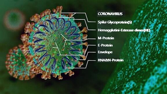 Corona-Virus Mikroskopische Ansicht
