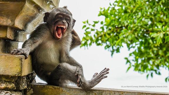 Ein Affe auf einem Geländer