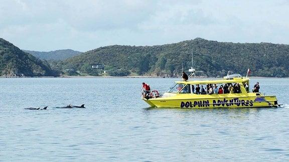 Touristen beobachten Delfine vom Boot aus.