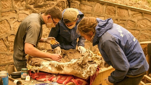Drei junge Männer beugen sich über einen Knochen, der etwa so groß ist wie eine Ziege. Alle tragen Mundschutz.