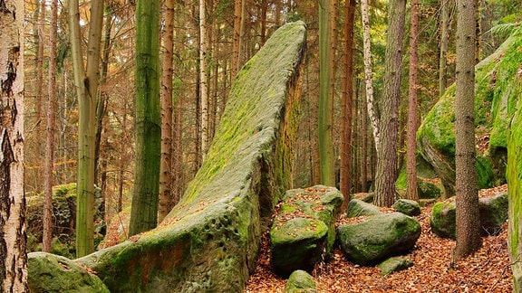 Felsen in einem Wald im Elbsandsteingebirge