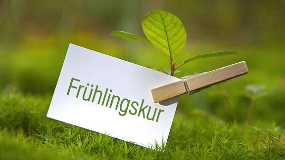 Vor dem Hintergrund einer Wiese ist eine kleine weiße rechteckige Pappkarte mit der Aufschrift ''Frühlingskur'' mittels einer Klammer an einer kleinen spriessenden Pflanze befestigt.