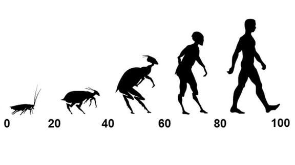 Entwicklung Kakerlake-Mensch