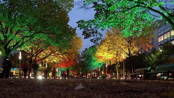 Beleuchtete Bäume beim Festival of Lights 2009 in Berlin, Unter den Linden.