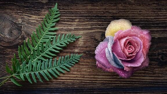 Montage: Auf einem Holzuntergrund liegen zwei Blätter eines Farns und eine farbenprächtige Rosenblüte