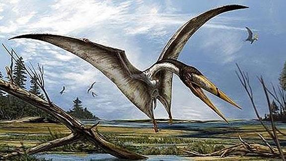 Flugsaurier Alanqa