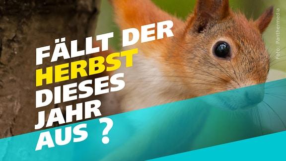 Ein Eichhörnchen guckt den Betrachter an. Auf einem Schriftzug steht quer darüber: Fällt der Herbst dieses Jahr aus?