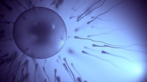 Fruchtbarkeit
