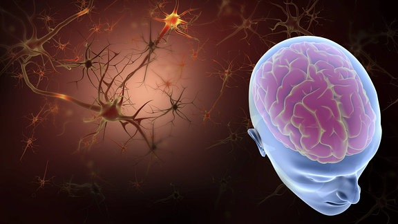 Konzeptbild Gehirn eines Menschen und Neuronen