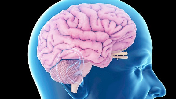 Illustration Gehirn eines alten Mannes