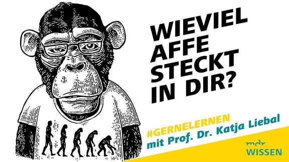 animierte Bild mit einem Affen