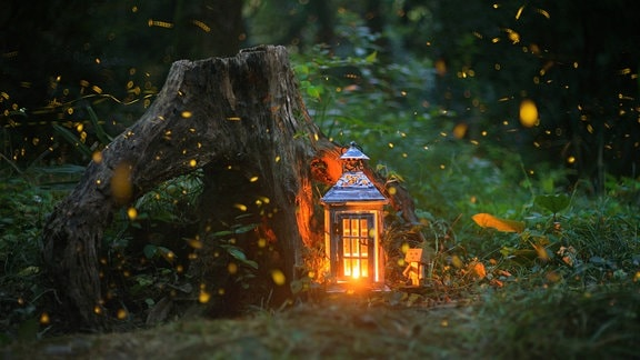Laterne von Glühwürmchen umgeben