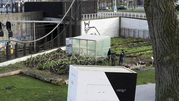 Gemeinschaftsgarten auf einer Brachfläche in der Innenstadt von Rotterdam: Anwohner bauen Gemüse an