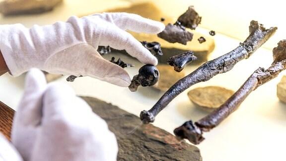 Handknochen vom Affen